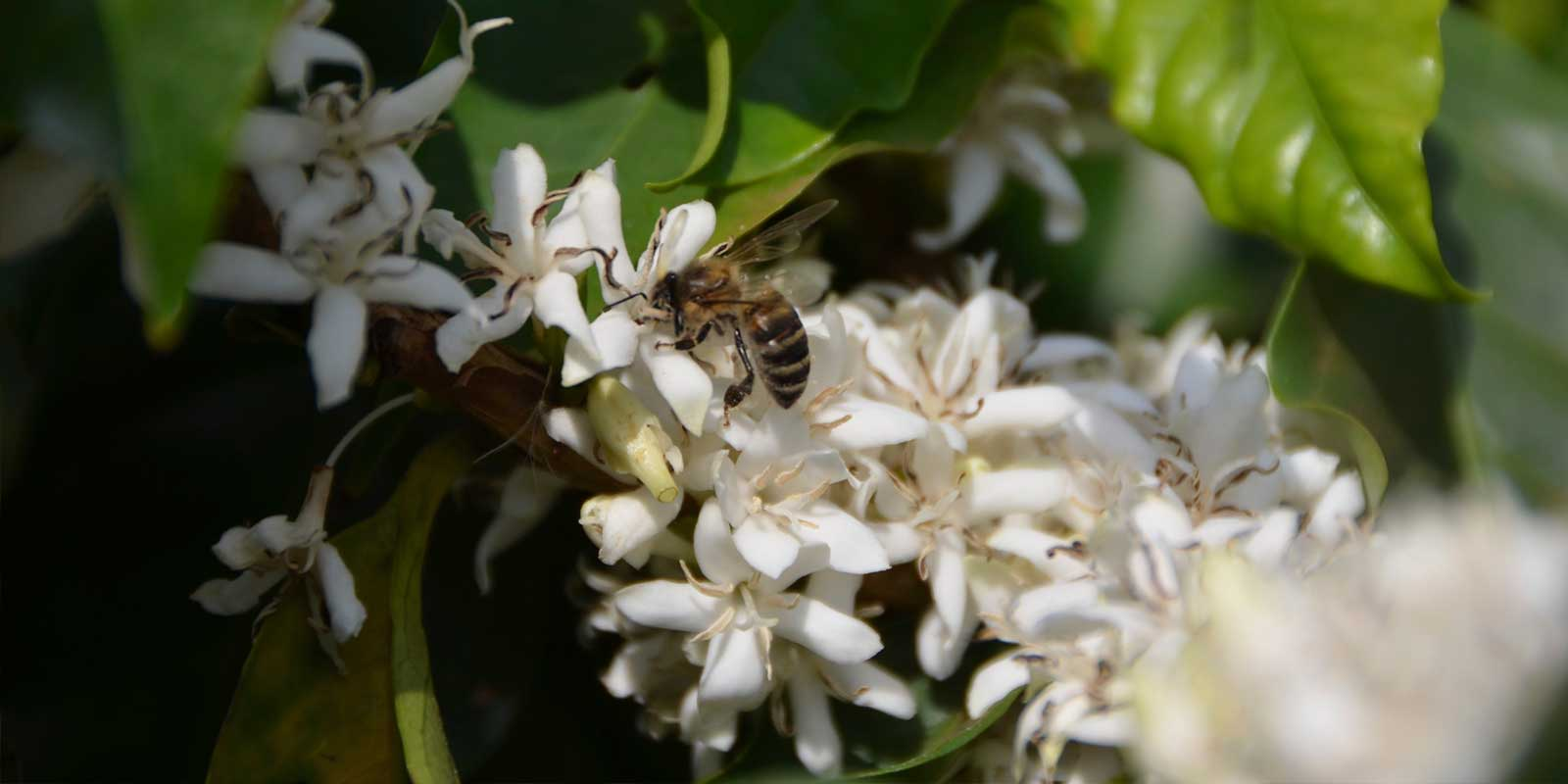 florada1